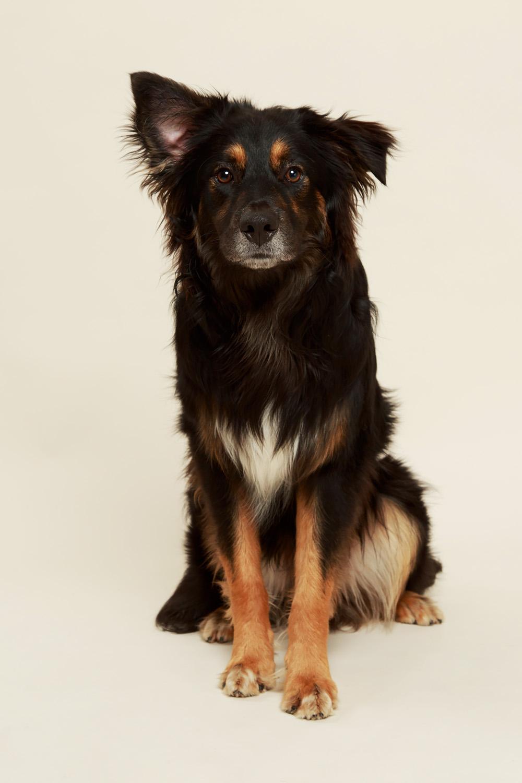 Hundfotograf Phia Bergdahl Västervik